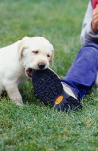köpeklerde kemirme