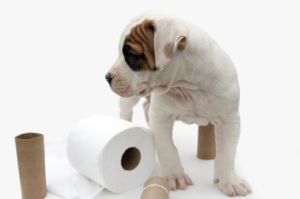 İshalli bir köpeğe ne verilir: nedenleri ve tedavisi