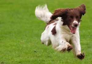 köpek egzersizi