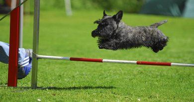 Köpek Eğitim Malzemeleri