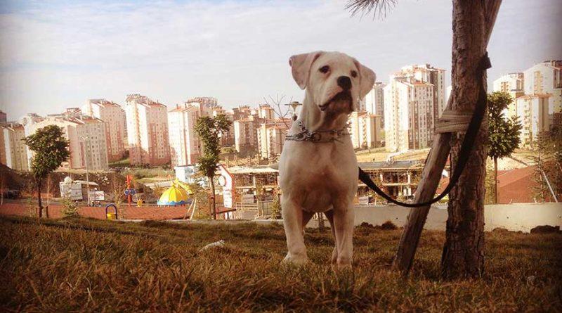 köpek egitimi hakkinda bilgiler
