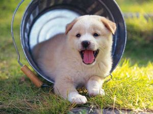 puppy-kopek-egitimi