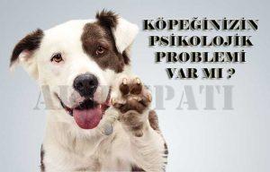 kopeklerde-psikoloji