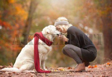 Köpeklerde Raşitizm
