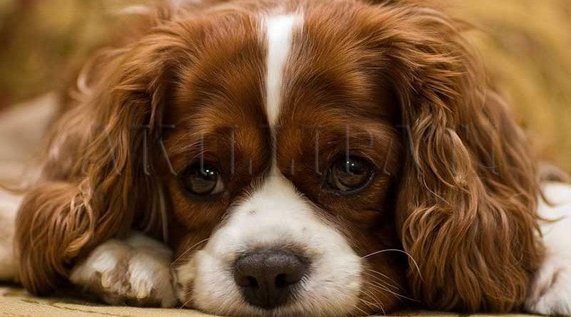 Köpeğinizin Yanlışlarını Düzeltin